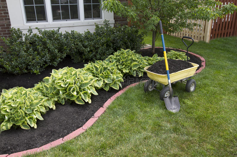 Mulching around the Bushes royalty free stock photography