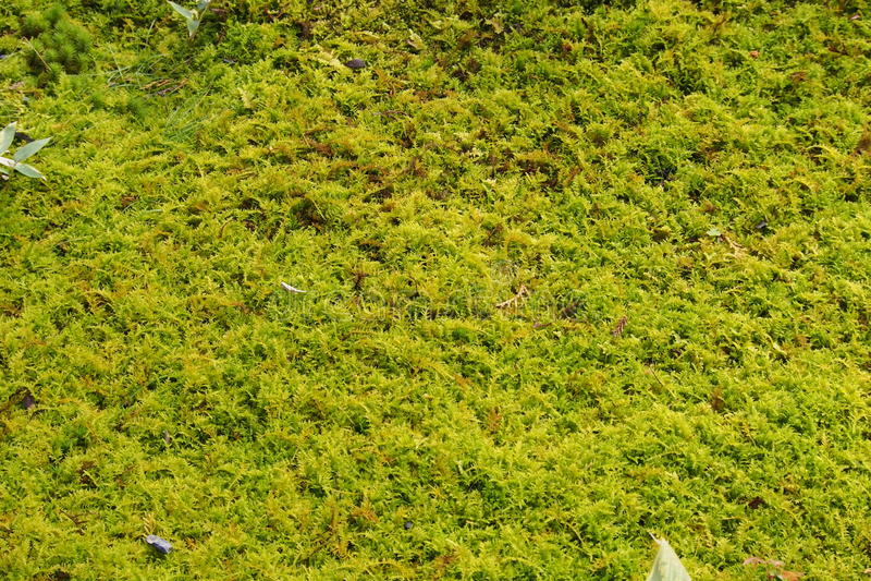 Mulching plants royalty free stock photos