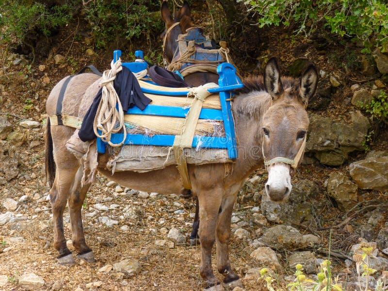 Download Mule image stock. Image du route, course, méditerranéen - 56488177