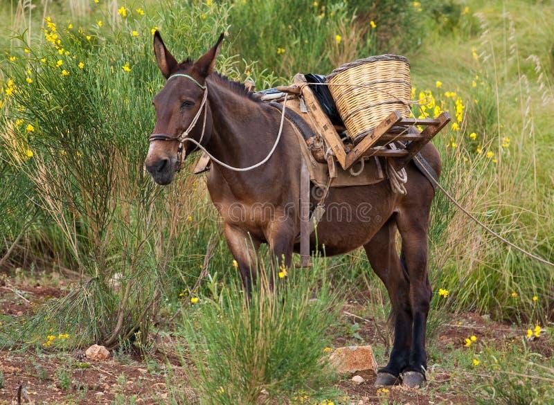 Mule dans les buissons photo libre de droits