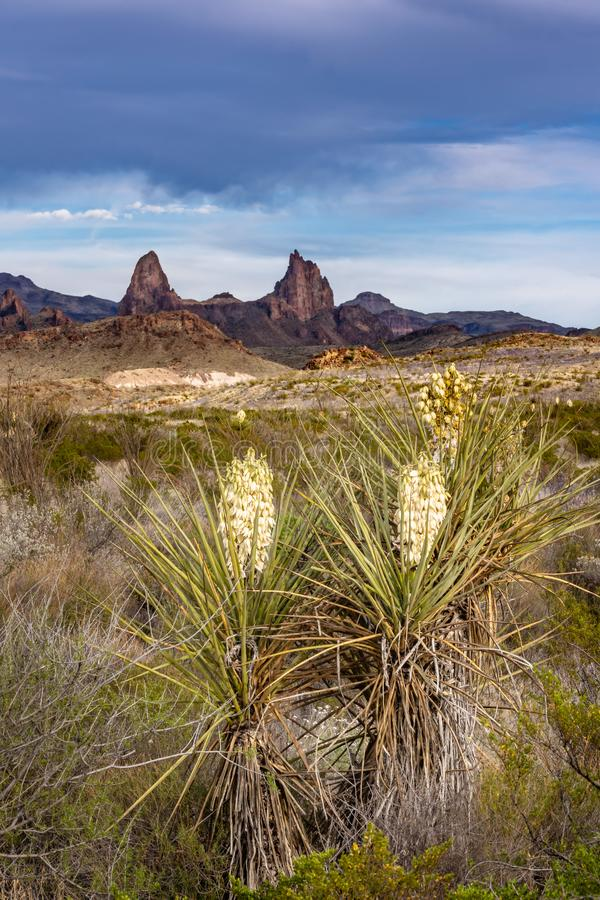 Mule ears in the background with yucca plants. And late afternoon sun royalty free stock photos