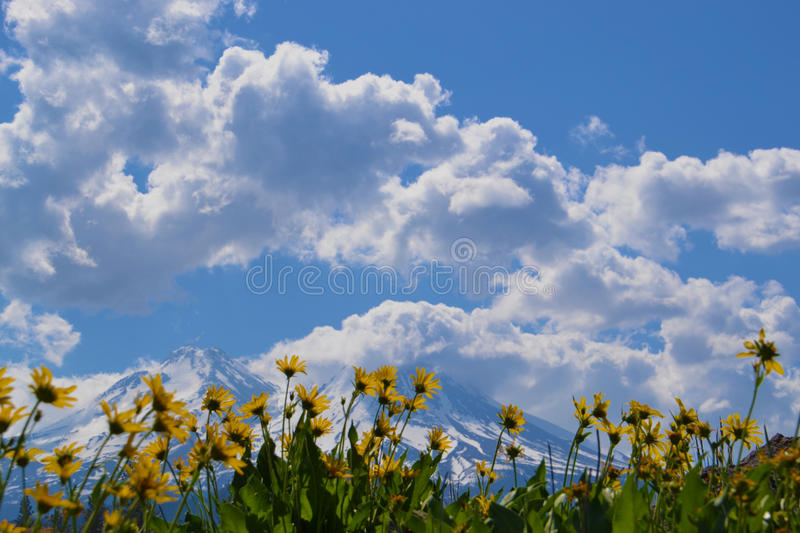 Mule ears and Mt Shasta stock images