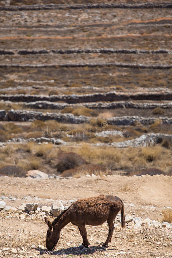 Download Mule  Eating At The Shoreline Stock Image - Image: 34403601