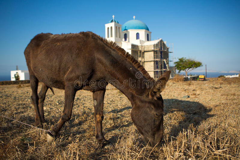 Download Mule  Eating At The Shoreline Stock Photo - Image: 34404114