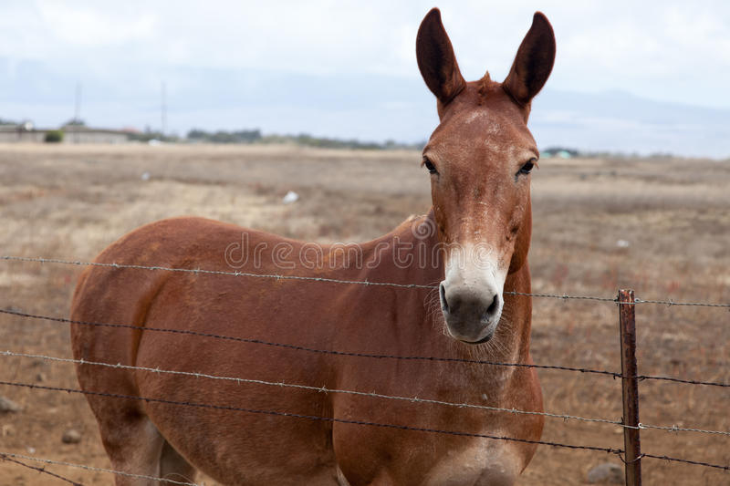 The Mule Look stock image