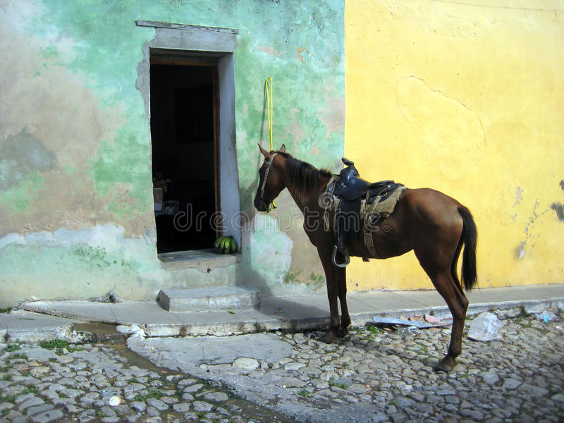 Mule parked outside of a residential home. A mule, or horse, which is parked outside of a residential home. Waiting for its owner or a potentially fruity reward royalty free stock image