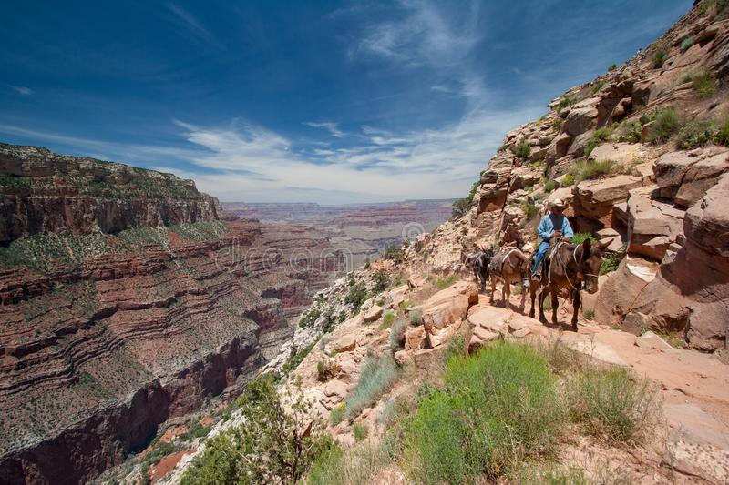 Mule train ascending South Kaibab Trail in Grand Canyon. royalty free stock photos