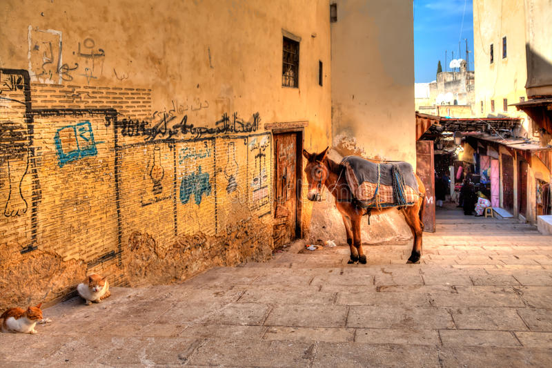 A mule and two cats are resting in an alley in Fes in the African country Morocco. And enjoys the silence royalty free stock images