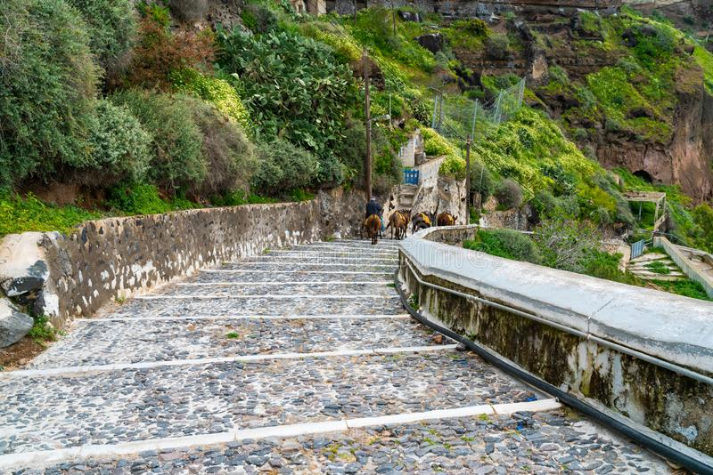 Mules walking down the steps leading to the harbour in Fira, Santorini royalty free stock photos