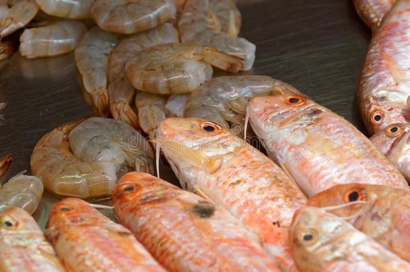 Mulet, perche et crevettes photo stock