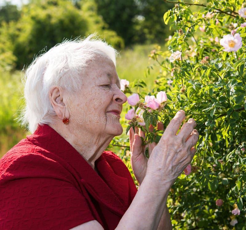 A mulher adulta cheira rosas do jardim imagens de stock royalty free