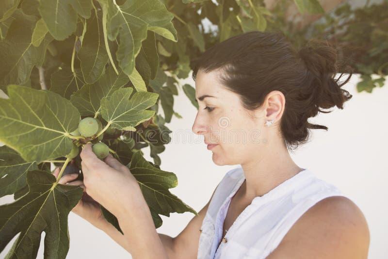 A mulher adulta meados de que recolhe figos na seleção da árvore amadurece-se dos inmatures, verão imagens de stock royalty free