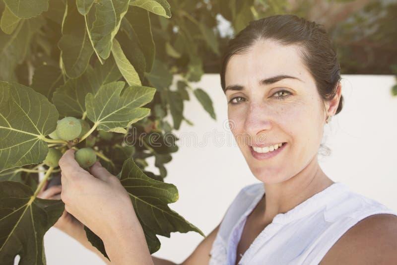 A mulher adulta meados de que recolhe figos na seleção da árvore amadurece-se dos inmatures, verão foto de stock royalty free