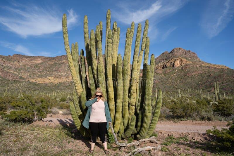Mulher adulta que escolhe seu nariz ao lado de um grande cacto da tubulação de órgão no Arizona imagens de stock royalty free