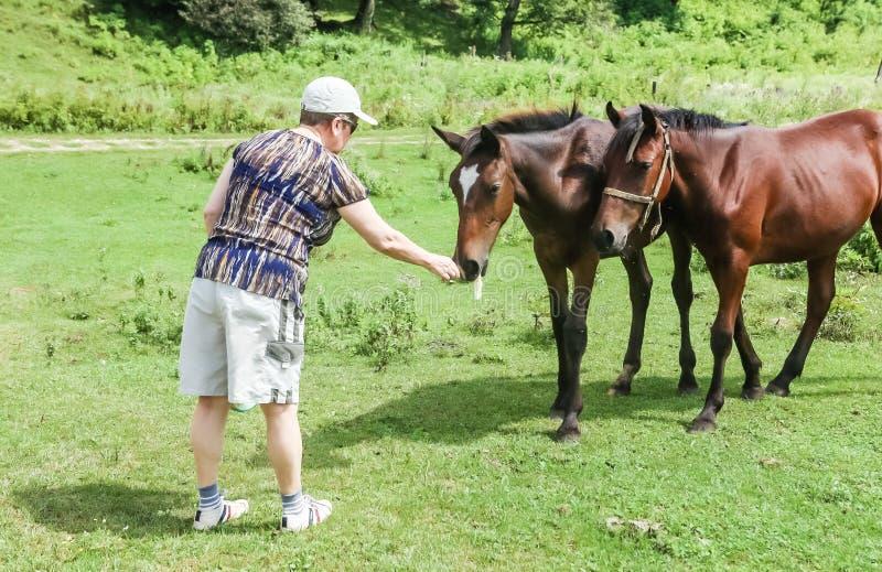 A mulher alimenta um cavalo com o animal do favorito das mãos foto de stock royalty free
