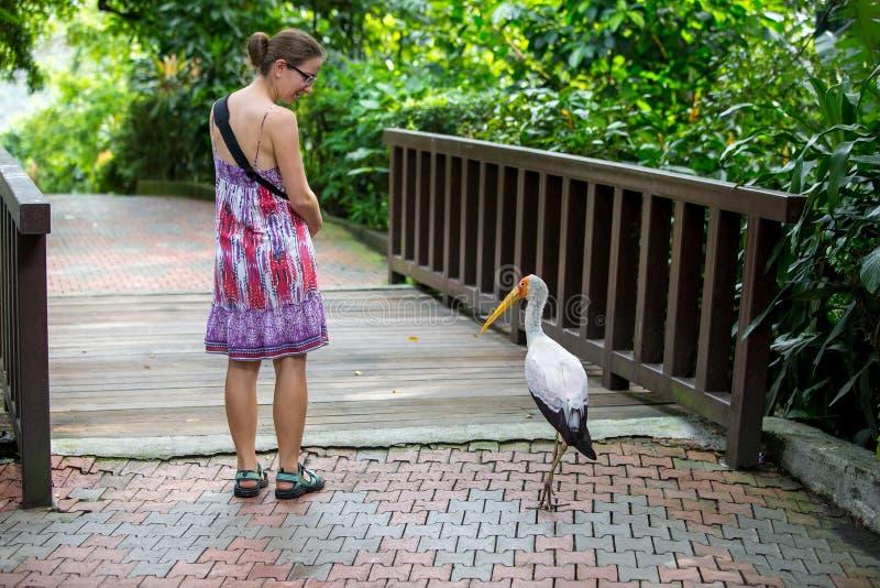 A mulher anda com o pássaro no jardim zoológico fotos de stock