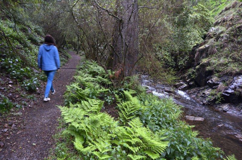 A mulher anda no trajeto da floresta úmida ao longo de um córrego da água foto de stock