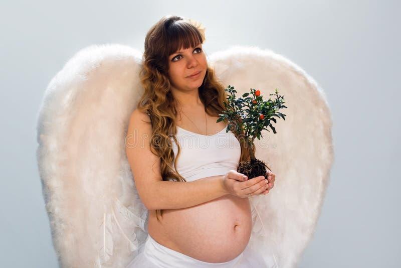 Mulher angélico grávida no fundo branco com árvore pequena fotografia de stock