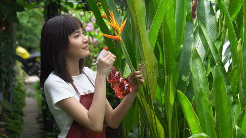 Mulher asiática nova em flores molhando do avental pela garrafa nevoenta do pulverizador no jardim Planta??o do jardineiro Jardin imagem de stock