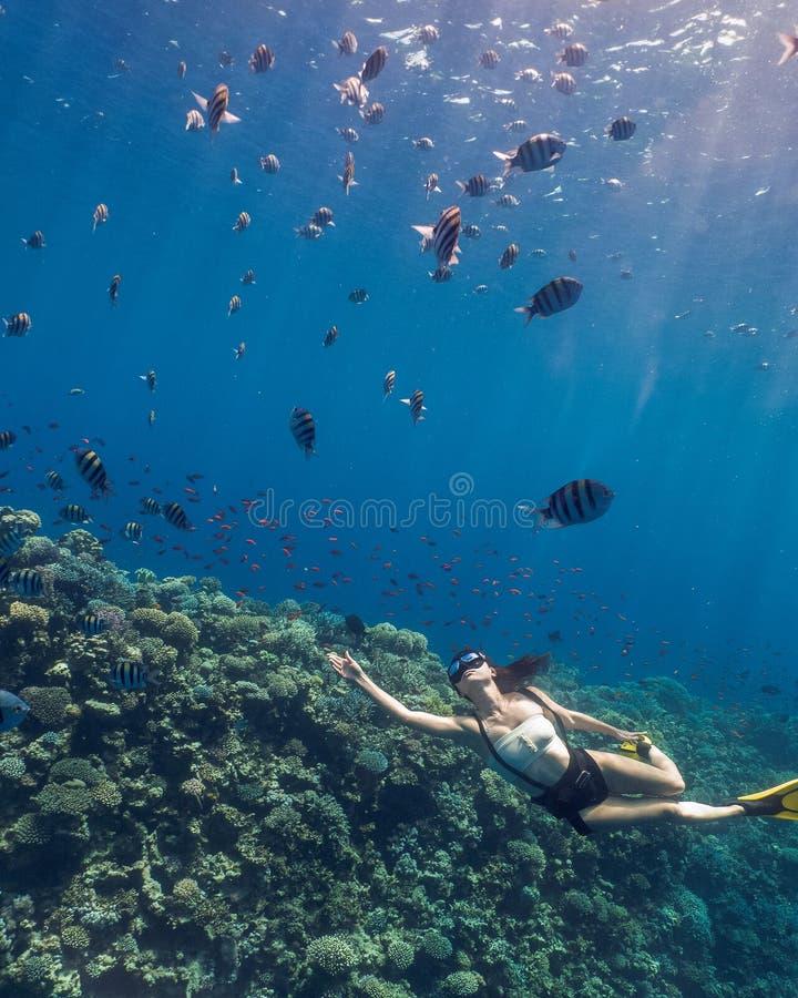 Mulher asiática que freediving no recife azul do furo imagens de stock royalty free
