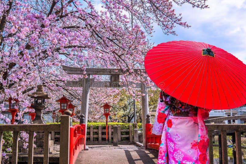 Mulher asiática vestindo quimono tradicional japonês e cereja floresce na primavera, templo de Quioto no Japão foto de stock