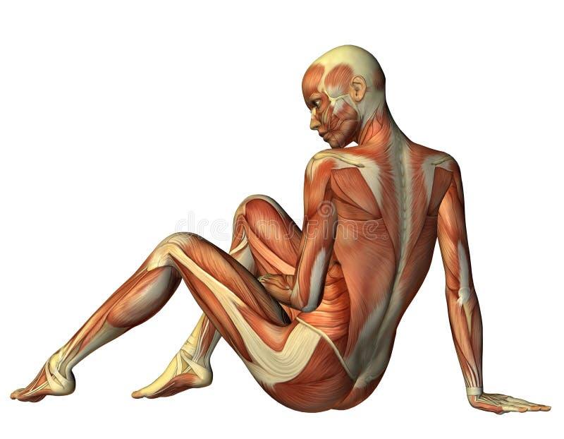 Mulher assentada músculo de atrás ilustração do vetor