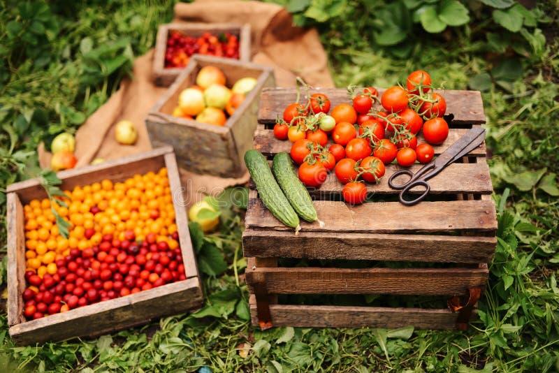 Mulher atrativa nova em uma exploração agrícola Fruto da colheita do fazendeiro da mulher para imagem de stock royalty free