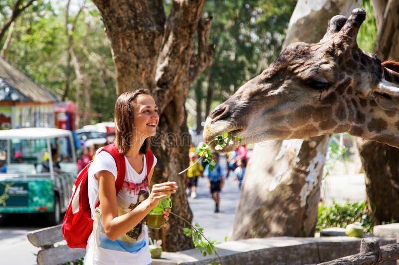 Mulher atrativa nova que alimenta um girafa no jardim zoológico imagem de stock royalty free