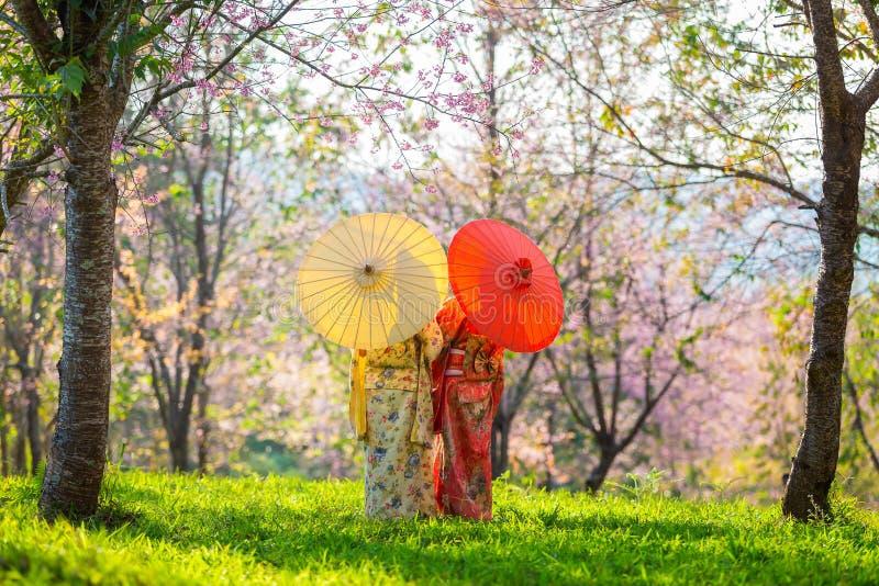 Mulher bonita asiática que veste o quimono e a flor de cerejeira japoneses tradicionais na mola, Japão foto de stock