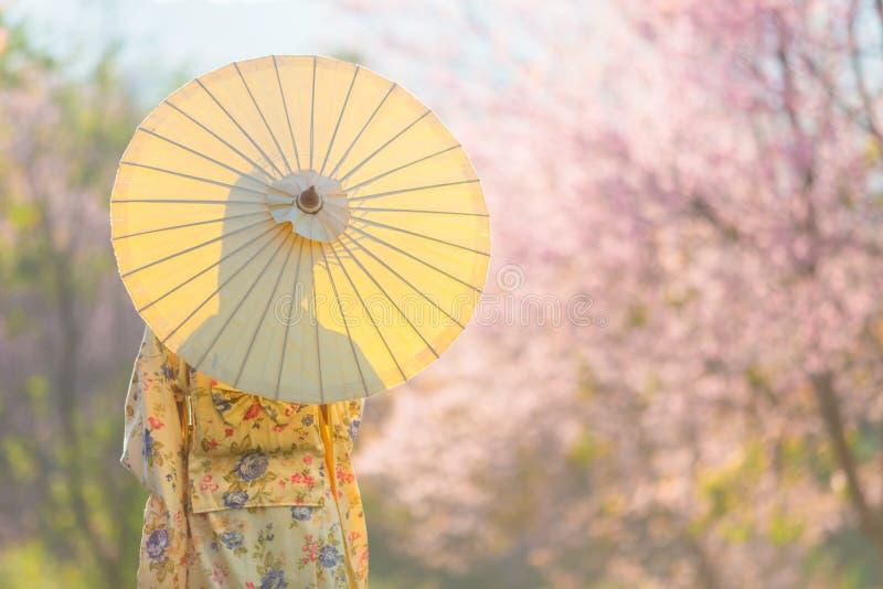 Mulher bonita asiática que veste o quimono e a flor de cerejeira japoneses tradicionais na mola, Japão foto de stock royalty free
