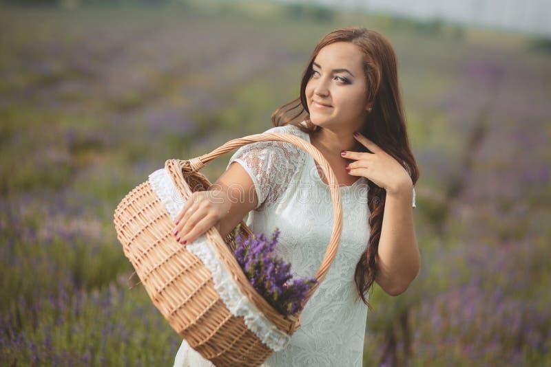 A mulher bonita de provence que relaxa no campo da alfazema que olha no por do sol que guarda a cesta com lavanda floresce série  imagem de stock royalty free