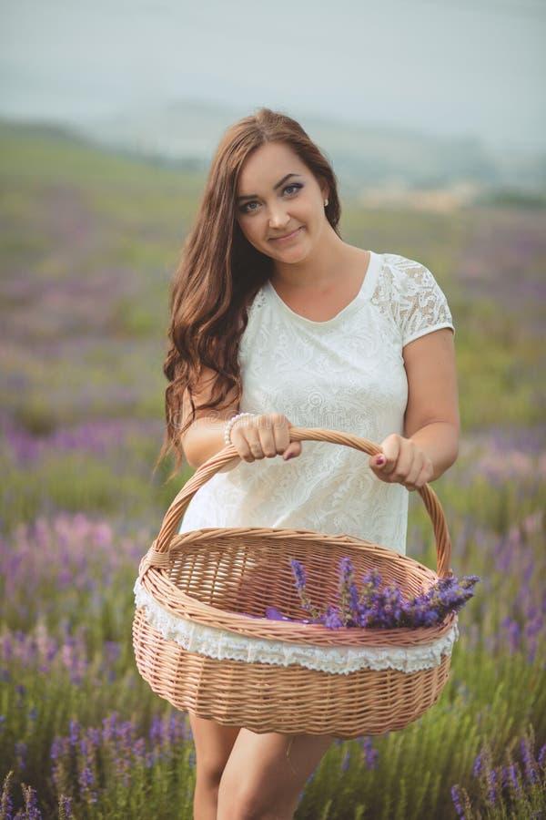 A mulher bonita de provence que relaxa no campo da alfazema que olha no por do sol que guarda a cesta com lavanda floresce série  fotografia de stock royalty free
