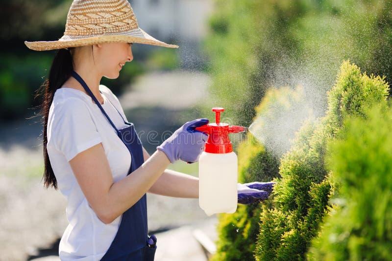 A mulher bonita do jardineiro no chapéu de palha polvilha plantas de um pulverizador do jardim imagem de stock royalty free