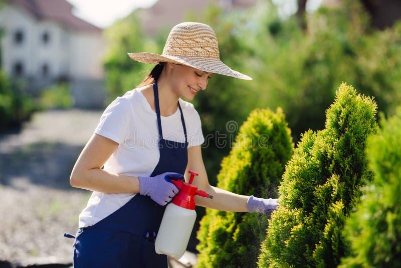 A mulher bonita do jardineiro no chapéu de palha polvilha plantas de um pulverizador do jardim imagens de stock royalty free