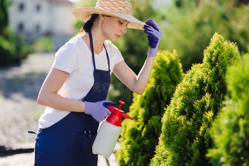 A mulher bonita do jardineiro no chapéu de palha polvilha plantas de um pulverizador do jardim imagem de stock