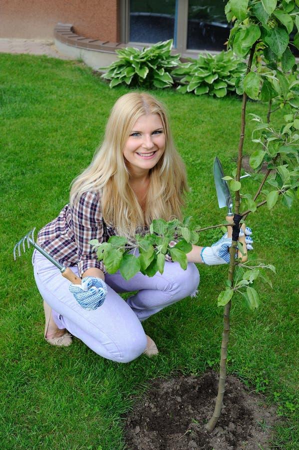 Mulher bonita do jardineiro que planta a árvore de maçã imagem de stock
