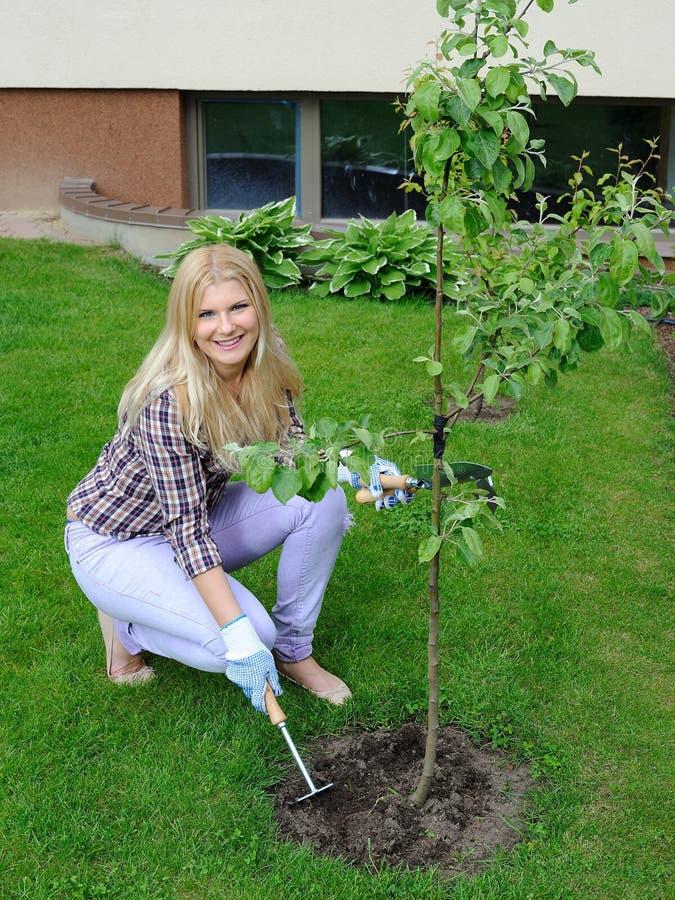 Mulher bonita do jardineiro que planta a árvore de maçã imagens de stock royalty free