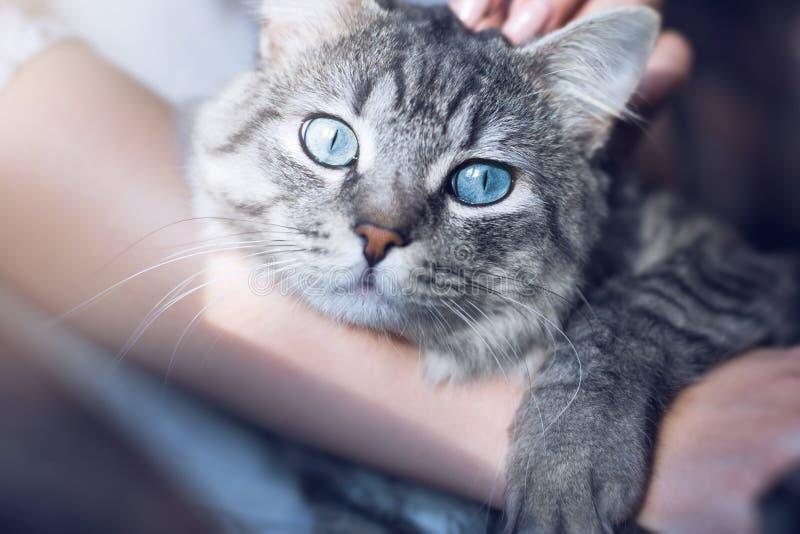 Mulher bonita em casa que guarda e para abraçar seu gato macio bonito Animais de estimação, amizade, confiança, amor, conceito do fotografia de stock royalty free