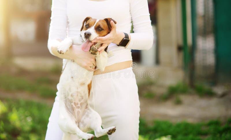 mulher bonita feliz nova que guarda o cão pequeno imagens de stock royalty free