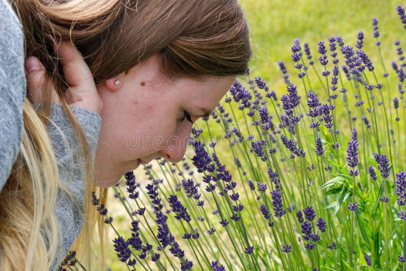 Mulher bonita nas flores de cheiro do jardim Menina que cheira um ramalhete da alfazema em um dia de verão quente envelhecido imagem de stock royalty free