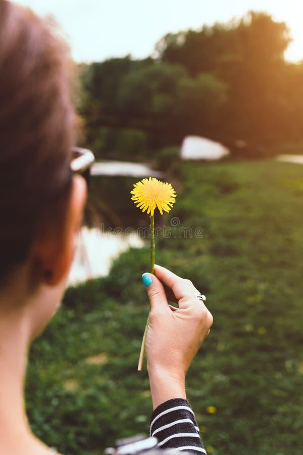 Mulher bonita nova com os dentes-de-leão amarelos no parque ensolarado do verão foto de stock