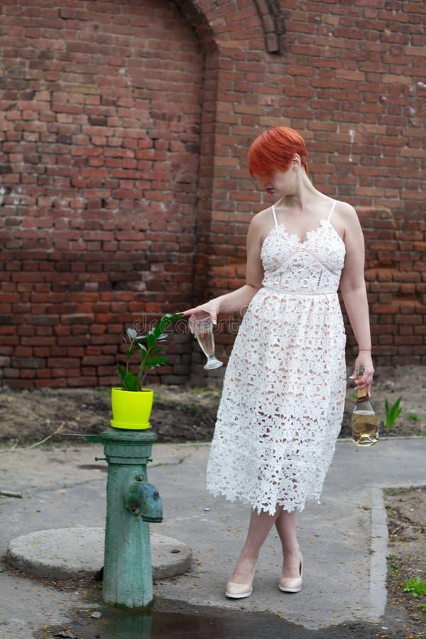 Mulher bonita nova em um vestido branco com um vidro de tim-tim do vinho com os zamiokulkas de uma planta imagens de stock