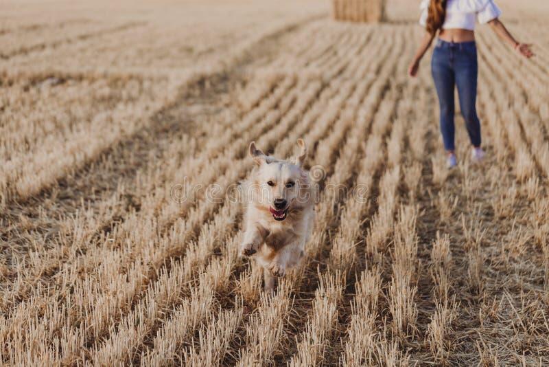 Mulher bonita nova que anda com seu cão do golden retriever em um campo amarelo no por do sol Ar livre da natureza e do estilo de foto de stock