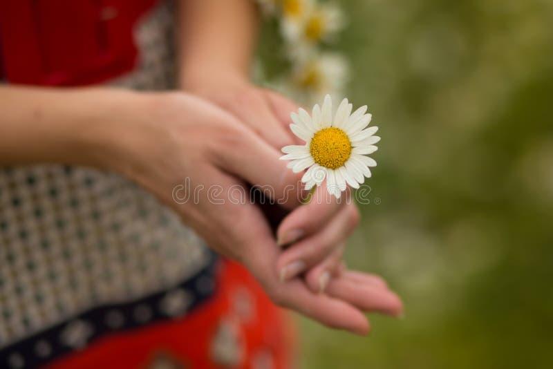 Mulher bonita que aprecia o campo da margarida, fêmea agradável que encontra-se para baixo no prado das flores, relaxamento bonit imagens de stock