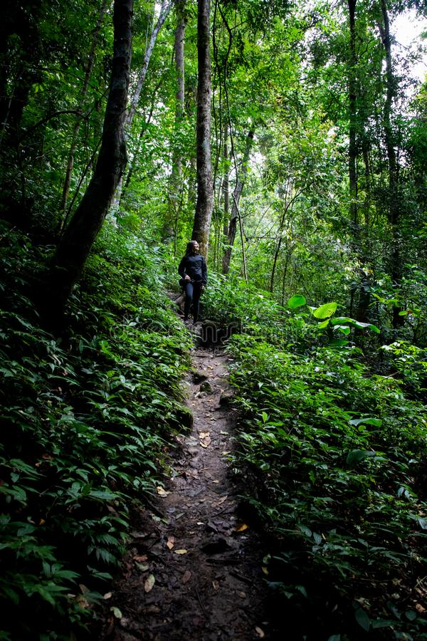 Mulher bonita que caminha no trajeto em uma floresta úmida em Chiang Mai & em x28; Tailândia fotos de stock