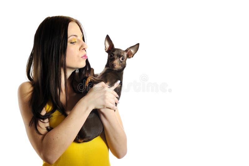 Mulher bonita que prende pouco cão do terrier de brinquedo imagem de stock