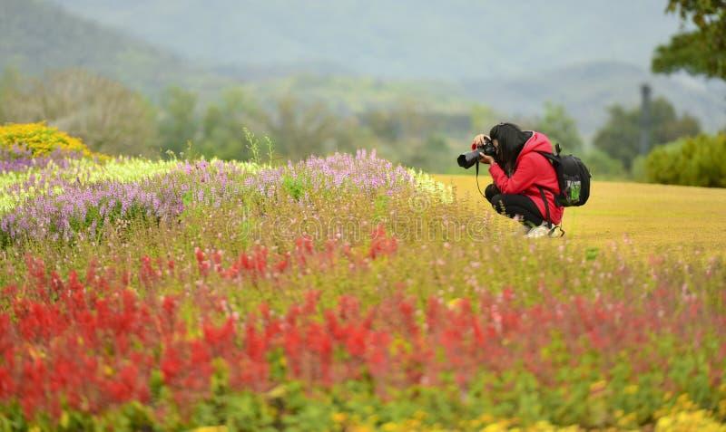 Mulher bonita que toma fotografias das flores fotos de stock royalty free