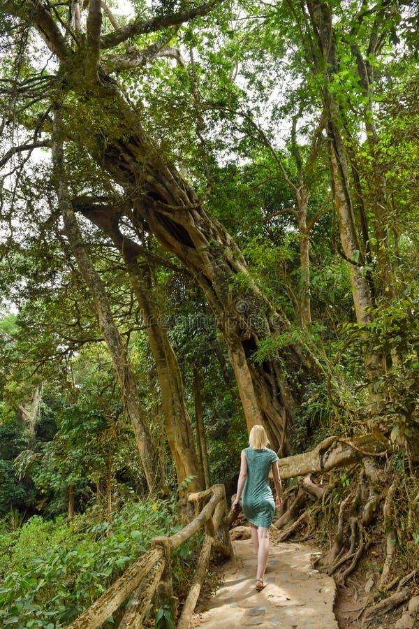 Mulher caminhando nas selvas fotografia de stock royalty free