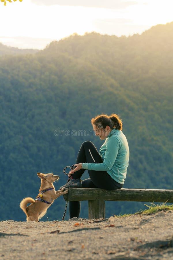 Mulher caminhante sentada no banco e brincando com um cachorro pequeno no topo da colina fotos de stock royalty free