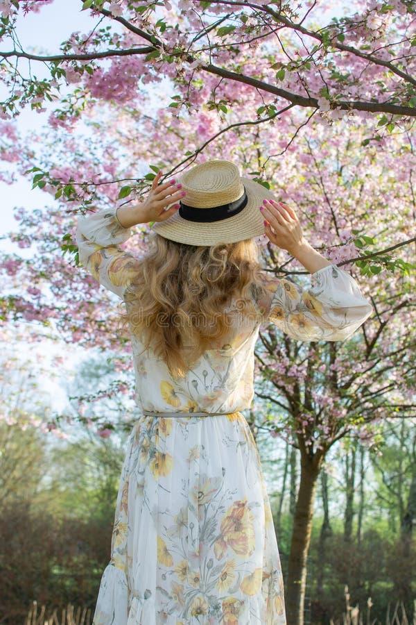 Mulher caucasiano bonita bonita no vestido que est? de levantamento no fundo da cereja de floresc?ncia de Jap?o imagem de stock royalty free